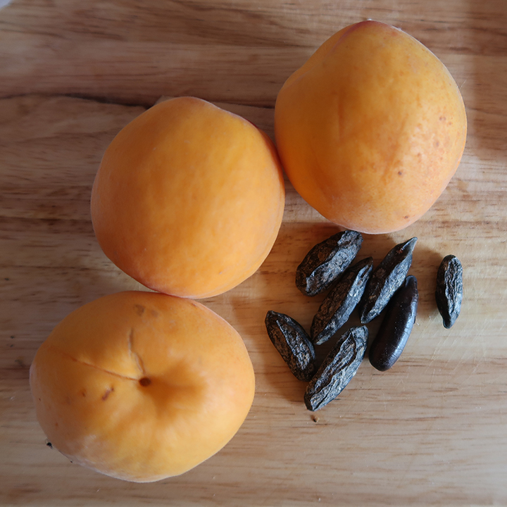 Apricots with tonka beans
