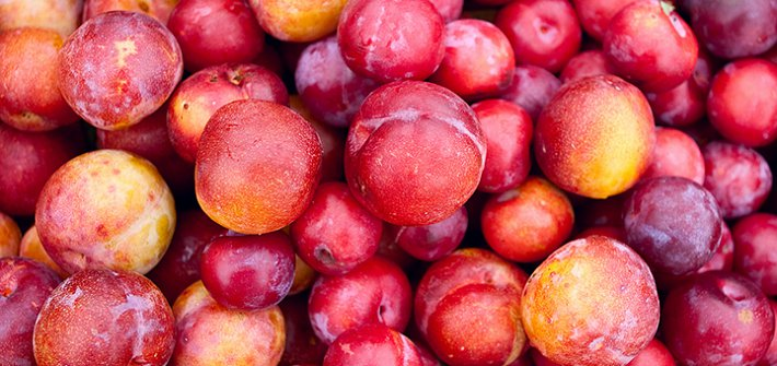 Plums and sustainability